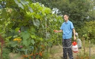 Сад огород дача цветы мое хобби фото