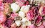 Пикировка рассады цветов требуется умение и терпение