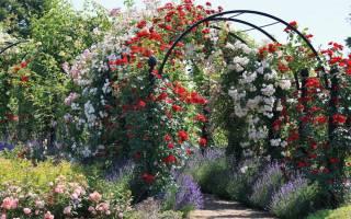 Удобрения для роз осенью