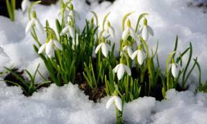 Ранние цветы весной названия и фото