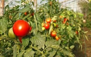Особенности выращивания овощей в теплице