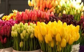 Использование тюльпанов в оформлении сада