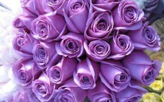 Радужные розы картинки
