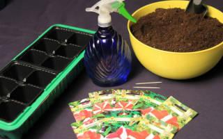 Как ухаживать за петунией рассадой