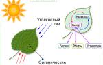 Какой спектр света нужен для роста растений