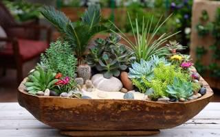 Какие растения относятся к суккулентам