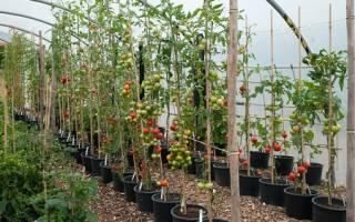 Какие помидоры для теплиц считаются высокорослыми и урожайными