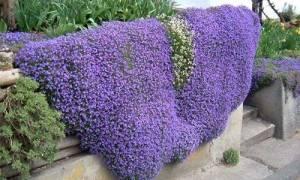Ампельные цветы для кашпо фото и названия