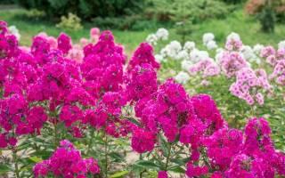 Какие цветы цветут в июле