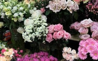Зимние цветы названия и фото