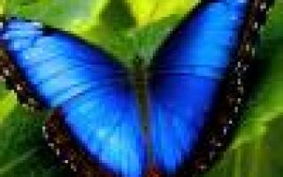 Азиатские лилии посадка и уход фото