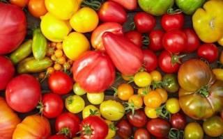 Новые сорта помидоров для теплиц