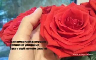 Признаки увядания розы