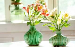Распространенные виды и цветы альстромерии