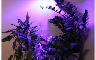 Какой лампой подсвечивать цветы