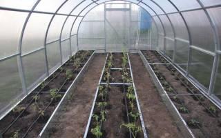 Когда высаживать рассаду помидор в теплицу