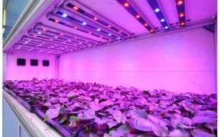 Виды светодиодных осветителей для теплиц
