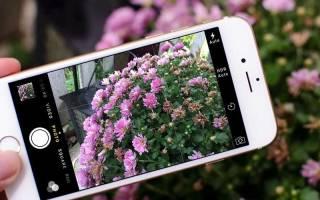 1 как фотографировать цветы в живой природе