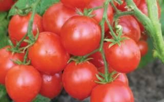 Ранние сорта томатов для теплиц описания и фото