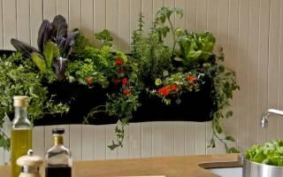 Цветы в интерьере кухни как выбрать место