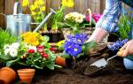 Летние красивые и неприхотливые цветы для дачи