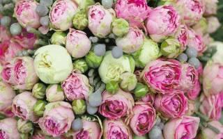 Разновидности форм цветка у пионовидных роз