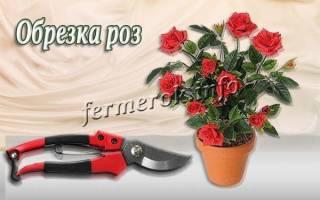 Правильная обрезка роз осенью