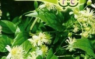 Как выглядят семена клематиса