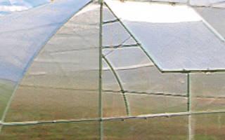 Клубника в теплице из поликарбоната