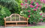 Хвойники и розы в ландшафтном дизайне фото