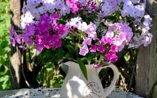 Флоксы многолетние цветы в саду