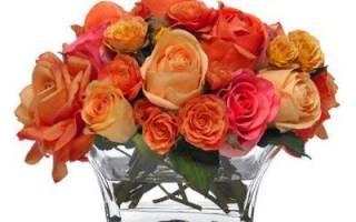 Роза проросла в вазе как посадить