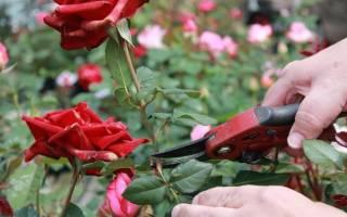 Особенности выращивания цветов в теплице как бизнес