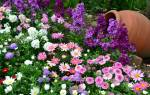 Бордюрные многолетники виды низкорослых цветов правила ухода