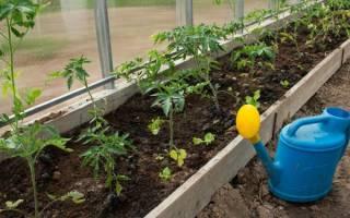 Полив помидоров в теплице как часто