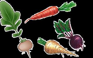 Какие растения относятся к корнеплодам