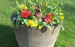 Какие цветы лучше для дома