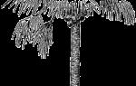 Крупные семена примеры растений