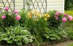 Какие посадить многолетние цветы на даче