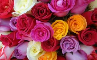 Что означают цвета роз