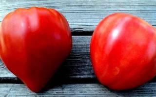 Самый урожайный сорт помидор для теплицы
