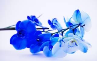 Синие цветы символ неба