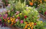 Схема высаживания однолетних цветов