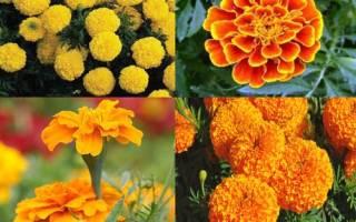 Какие цветы цветут в июне