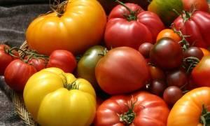 Крупноплодные сладкие томаты для теплиц