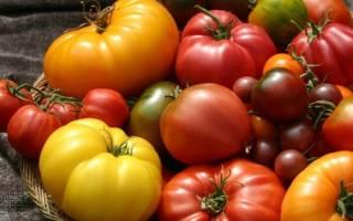 Крупноплодные сорта томатовдля теплиц