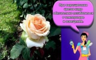 Подбор роз для клумбы