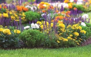 Низкорослые садовые цветы фото и названия