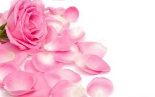 Сухие лепестки роз применение