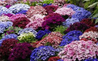 Дизайн из садовых флоксов ирисов пионов гортензий роз